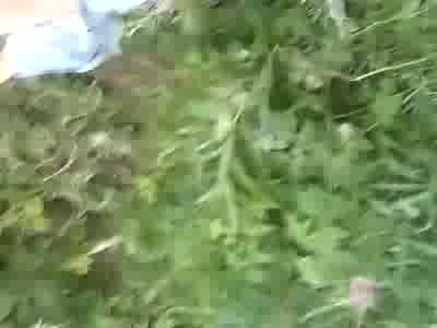 Раком порно в ивановской деревне фетиш негритянкой видео